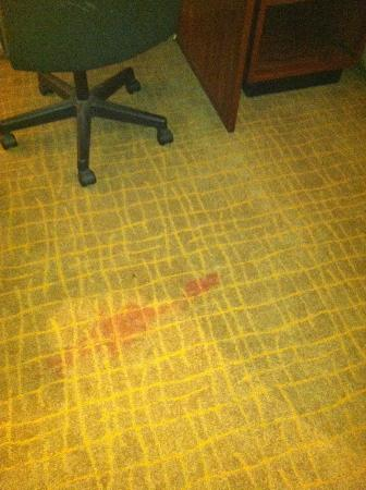 Howard Johnson Waukegan Great Lakes: floor stain
