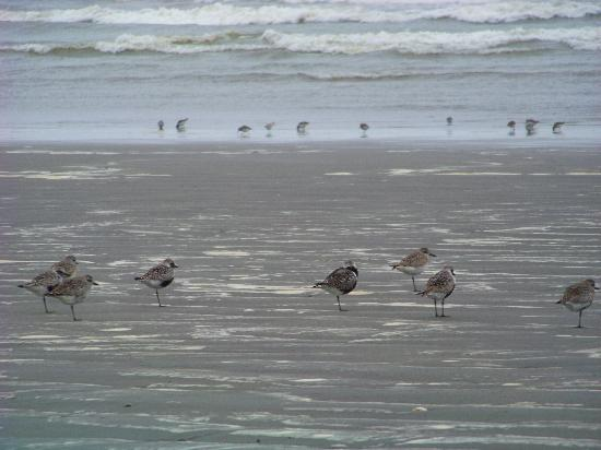 The beach in front of the Grey Gull