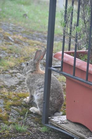 Boardwalk on the Water: bunnies!