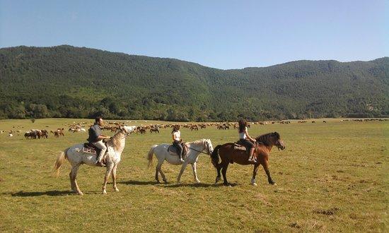 Ranch Brionna: la vallata con 500 cavalli e 400 mucche