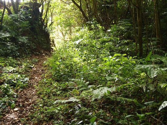 Boquete Chichi Tours: Inside the cloud forest
