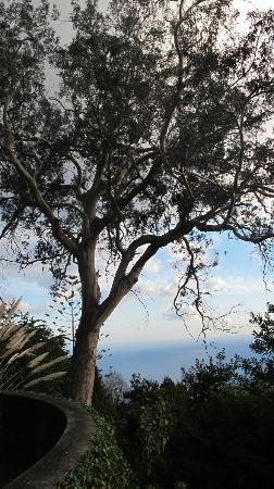 Quinta do Monte: un des arbres du jardin