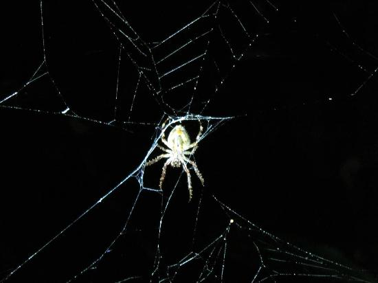 Wasai Tambopata Lodge: Creepy spider on Night Walk