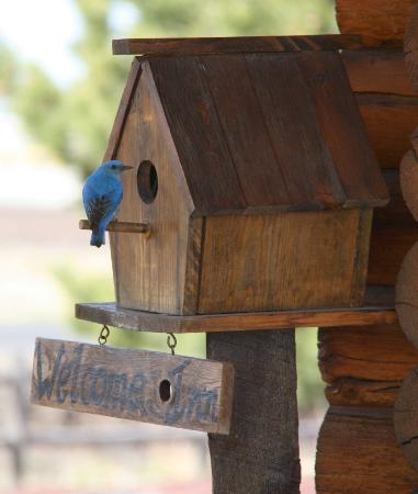 Grand Living Bed & Breakfast: Even the Blue Birds enjoy Grand Living