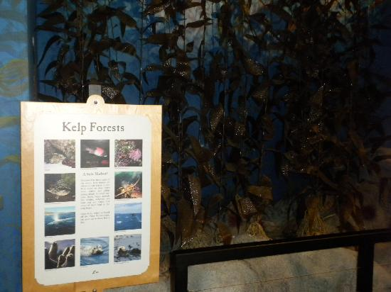 The Point Vicente Interpretive Center: Kelp Forest