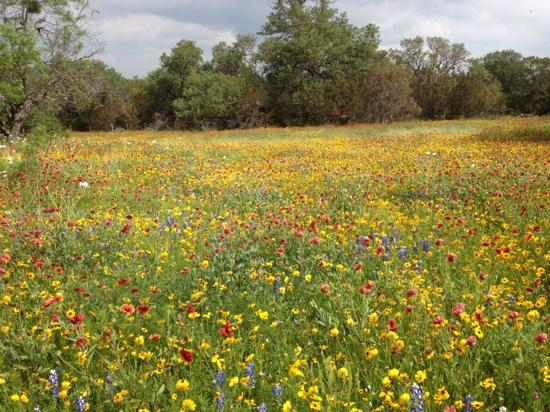 Fredericksburg, Τέξας: wild flowers on Willow City Loop 4/14/12