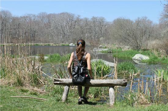 Pond - Picture of Norman Bird Sanctuary, Middletown - TripAdvisor