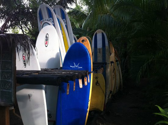 Del Mar Surf Camp: our surfboards
