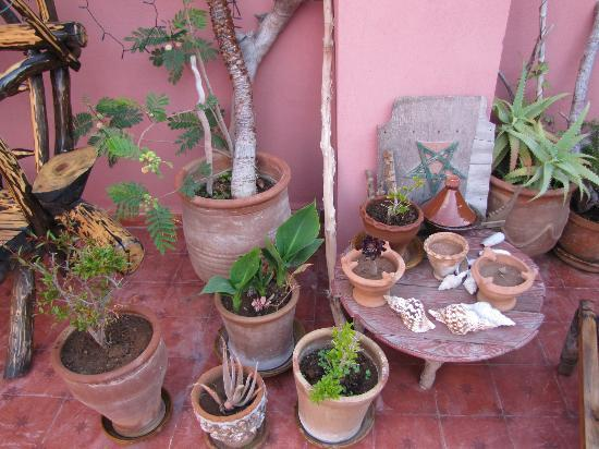 Casa Guapa de Tamuziga: Plants on the terrace