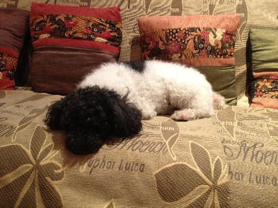 Santitham Guest House: Resident poodle