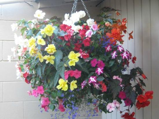 MALFROY motor lodge Rotorua - Accommodation and Mineral Pool: Hanging Baskets in small but well designed garden