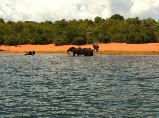 Bumi Hills Safari Lodge & Spa: Elephants splashing in the lake below the hotel, taken from fishing boat