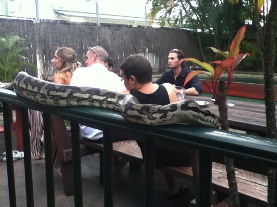 Calypso Inn Backpackers Resort: reptile show in beer garden
