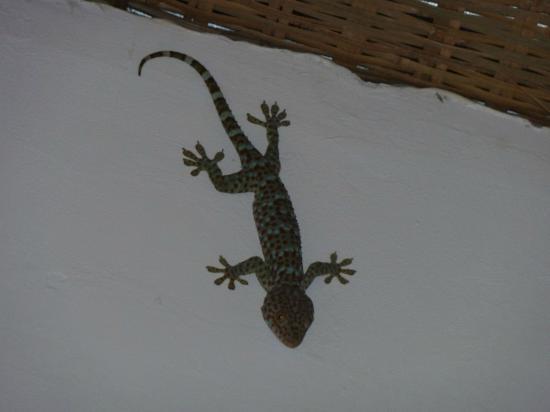 Mango Bay Resort: één van de gasten in onze kamer