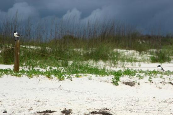Saint George Island State Park: rain approaching