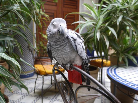Riad Al Bartal: Miss Poulette vous salue bien !!!