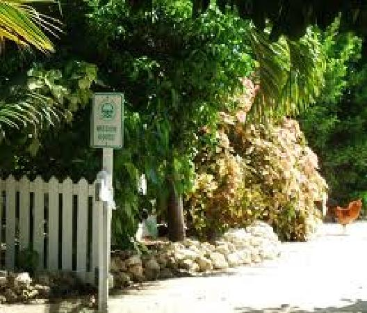 "Jackies Historical Land Tours: HISTORICAL "" Mission Home "" Garden"
