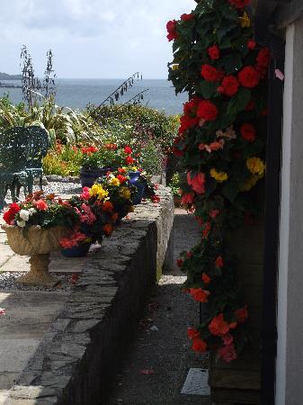 Blue Horizon Bed & Breakfast: Trailing Begonias