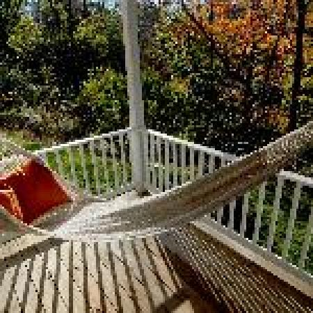 West Ridge Hollow B&B: DayDream, relax with view of the forest canopy