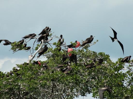 Sian Ka'an Biosphere Reserve: réserve d'oiseaux