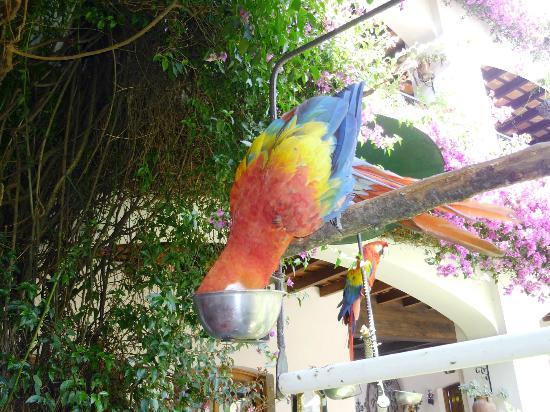 Santo Tomas Hotel: aves en el jardín