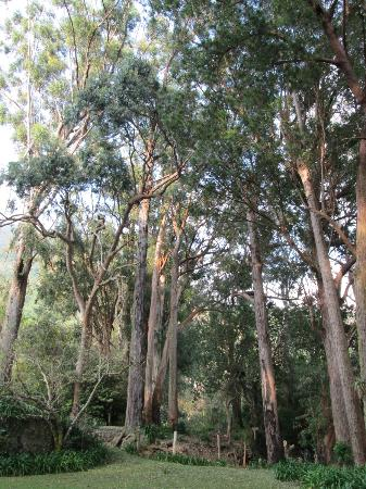 Trees at the entrance of Whitfield Hall Hostel