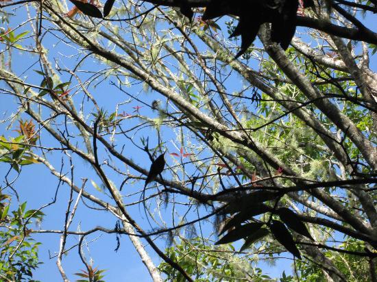Blue Mountains: Spot the hummingbird