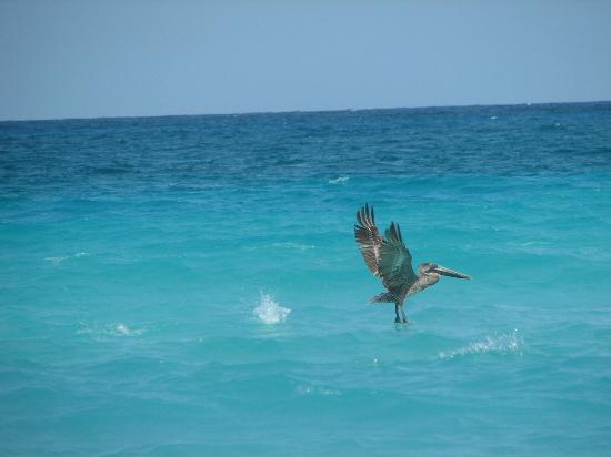 Bel Air Collection Resort & Spa Cancun: sea