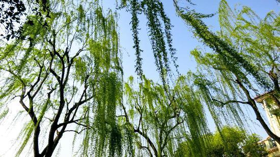 Wyndham Grand Plaza Royale Hangzhou : West Lake