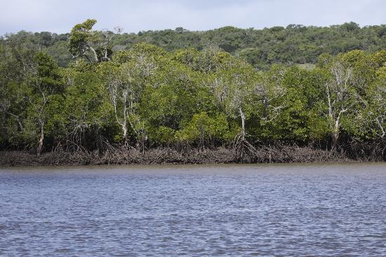 Machangulo, Mozambique: Mangrove Forests - not to be missed