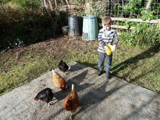Boffin Lodge: All the kids get a chance to feed to chickens and collect eggs for breakfast