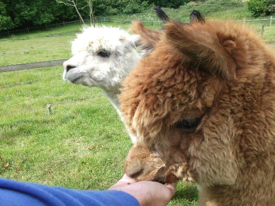 Penvith Barns: so friendly