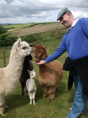 Penvith Barns: Even Ian was Alpaca friendly!
