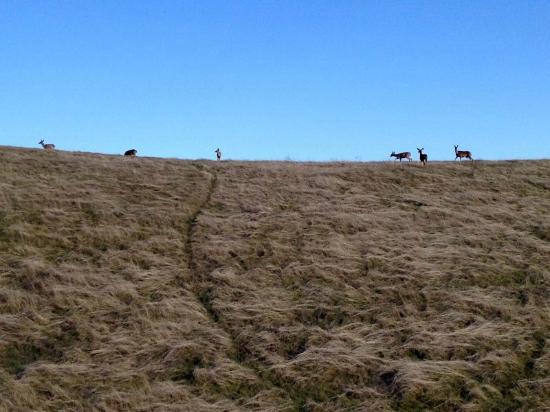 Monte Bello Open Space Preserve: Wildlife