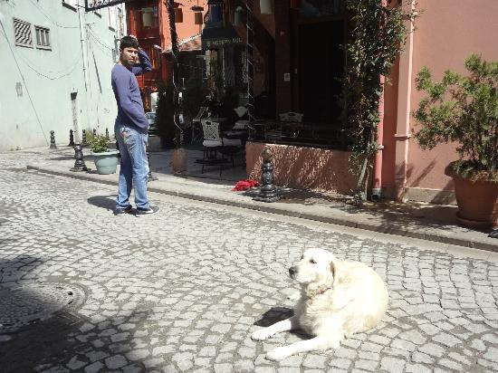 Cheers Hostel: Resident pooch and staff member taking a break