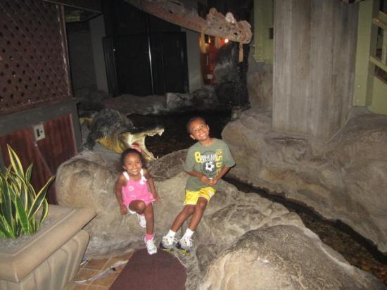 Hilton Orlando Buena Vista Palace Disney Springs: Outback Restaurant where live fish swim in a pond