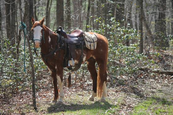 North Mountain Outfitter: My horse for the day