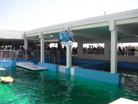 Winter 39 S Friend Panama Picture Of Clearwater Marine Aquarium Clearwater Tripadvisor