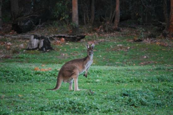 Riverwood Retreat Bed & Breakfast : Wildlife