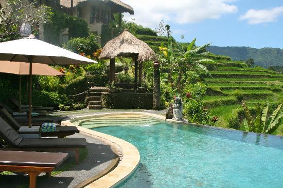 Surya Shanti Villa: Vue de la piscine côté bar