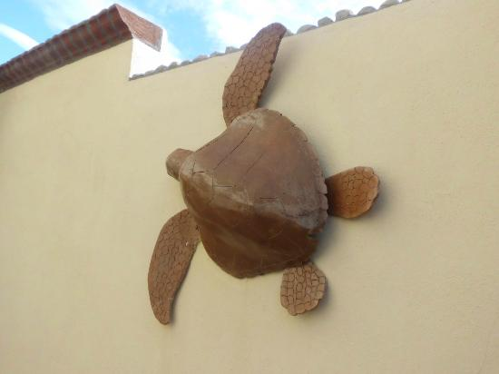 La Alianza: Turtles everywhere....