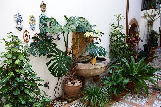 Patio interior con fuente y plantas naturales fotograf a - Plantas para patio interior ...