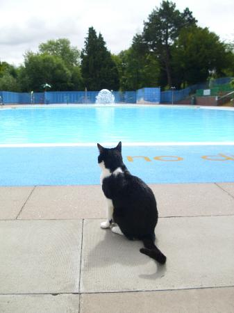 Droitwich Spa Lido: View of Pool with Lido Cat!
