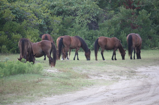 Bobs Wild Horse Tours (Corolla) - 2019 All You Need to ...