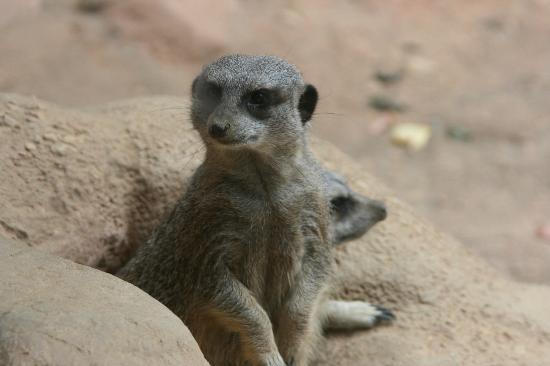 Minnesota Zoo照片