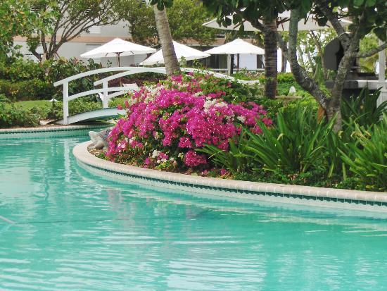 أوشن كلوب وست: Beautiful landscaping around pool.