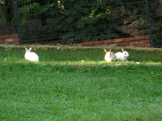 Kosdere Club Hotel: Bunnies in the garden