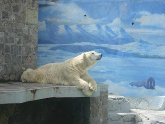 Santiago, Chili: urso polar