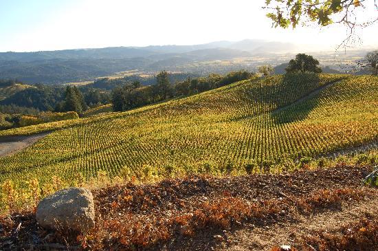 Spring Mountain Vineyard : Fall morning view