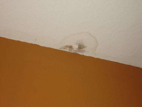 BEST WESTERN PLUS Circle Inn: large water stain above bed